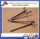 Us$500-800 Furniture Hardware Tool of Common Nails