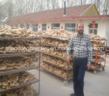 China High Quality Air Dry Ginger