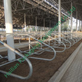 3mm Hot DIP Galvanized Pipe Livestock Free Stall