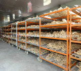 Fresh Ginger for Sale, Best Ginger, Fresh and Air Dry Ginger From China