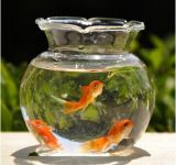 Mini Clear Glass Fish Bowl, Fish Tank, Glass Vase