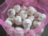 2015 New Crop Fresh White Garlic