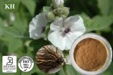 100% Natural Althaea Root Extract: 4: 1; 5: 1; 10: 1; 20: 1