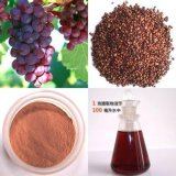 Factory Grape Seed Extract 95% Polyphenols-OPC