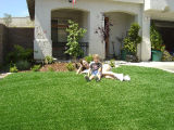 High Quality Landscaping & Leisure Artificial Grass (E535216DQ12042)